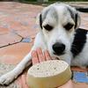 Eco Jabón para Mascotas