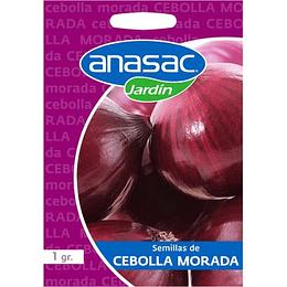 Semillas de Cebolla morada
