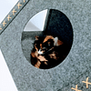 Casa tipi de gato