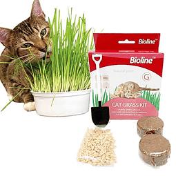 Kit de pasto para gatos *Cat grass kit*