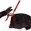 Arnés para conejo