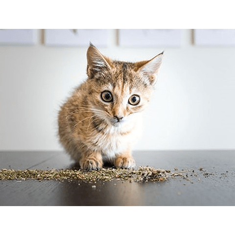 Catnip en tubo para gato