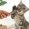 Snack koyak de catnip para gato