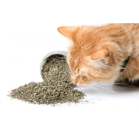 Catnip en frasco para gato 50 grms
