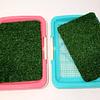 Baño sanitario para perro  pequeño o grande (33x46 y 46x64 cms)
