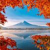 Magia otoñal en el monte Fuji | Puzzle Schmidt 1000 Piezas