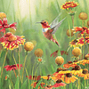 Rufous Hummingbird   Puzzle Cobble Hill 500 Piezas