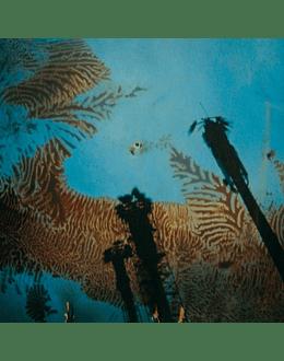 Niños del Cerro - Nonato Coo (CD)