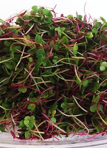 Mix de Micro Legumes 30 gr