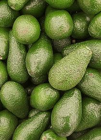 Abacate do Algarve