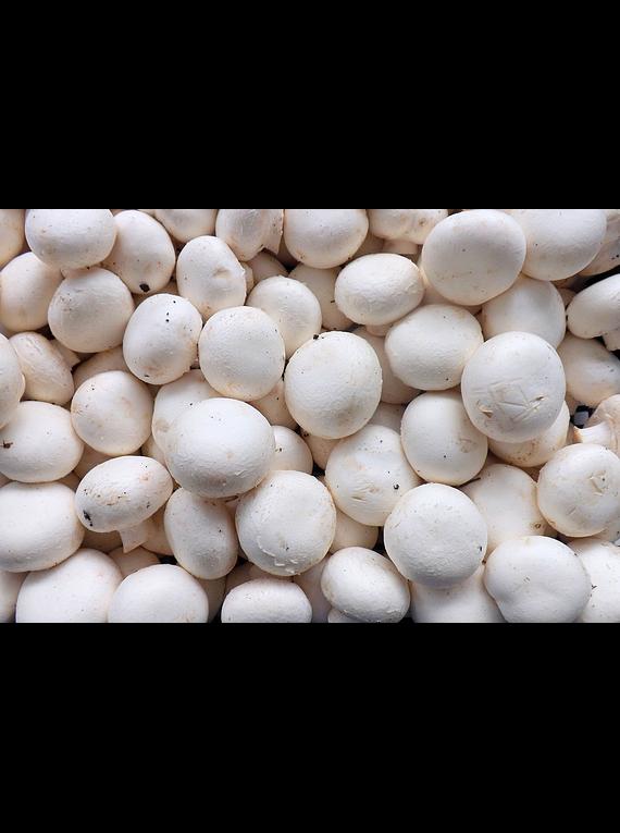 Cogumelo Branco 450gr