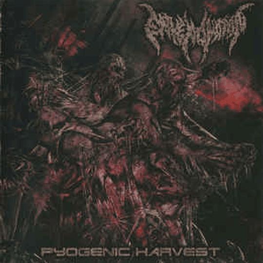 ENVENOMATION -  Pyogenic Harvest CD