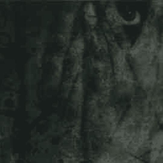 FORCE FED FLESH - The Human Virus CD