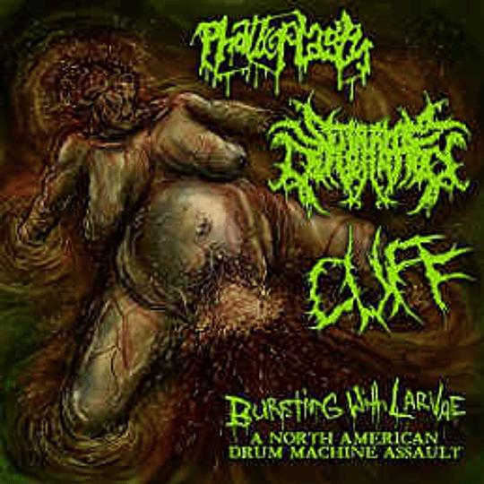 PHALLOPLASTY / SERAPHIM DEFLORATION / CUFF - Bursting With Larvae: A North American Drum Machine Assault  3 WAY SPLIT CD