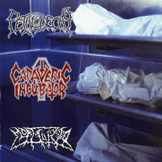 CADAVERIC INCUBATOR / FETAL DECAY / MORTALIZED - 3 WAY SPLIT CD
