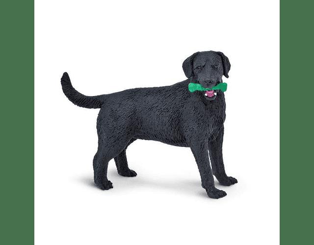 Labrador Negro
