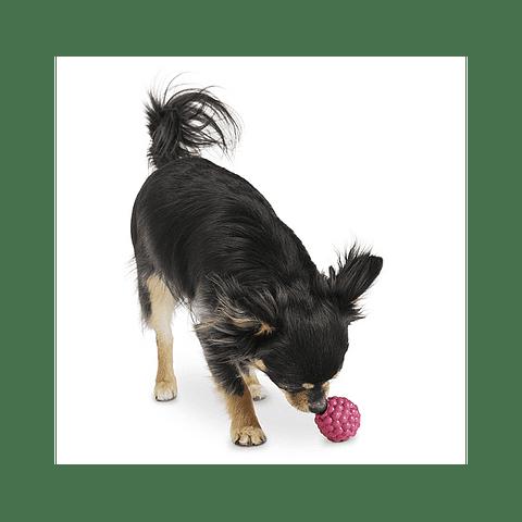 Frambuesa Planet Dog
