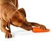 Zanahoria Planet Dog
