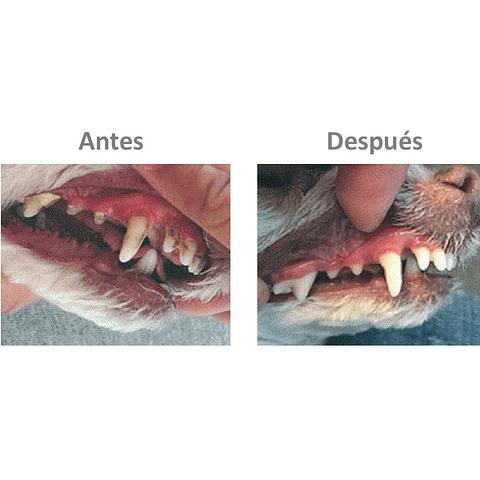 Plaque off perro