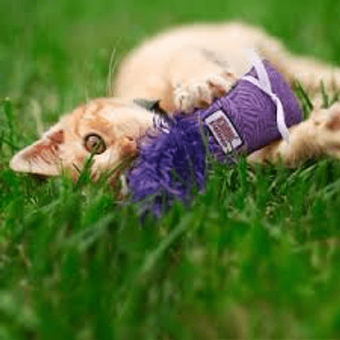 kong kitten kickeroo