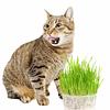 Kit pasto para gatos