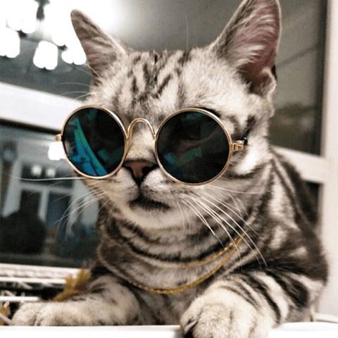 gafas para mascotas