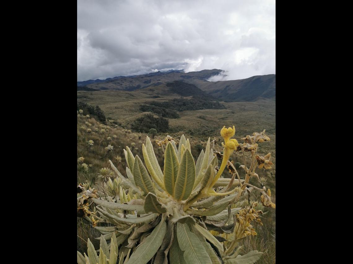 Expédition au Páramo de Chilí