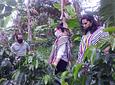 Visite de la ferme Mana María (visite du café)