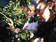 Experience in Café Díaz (Coffee Tour)