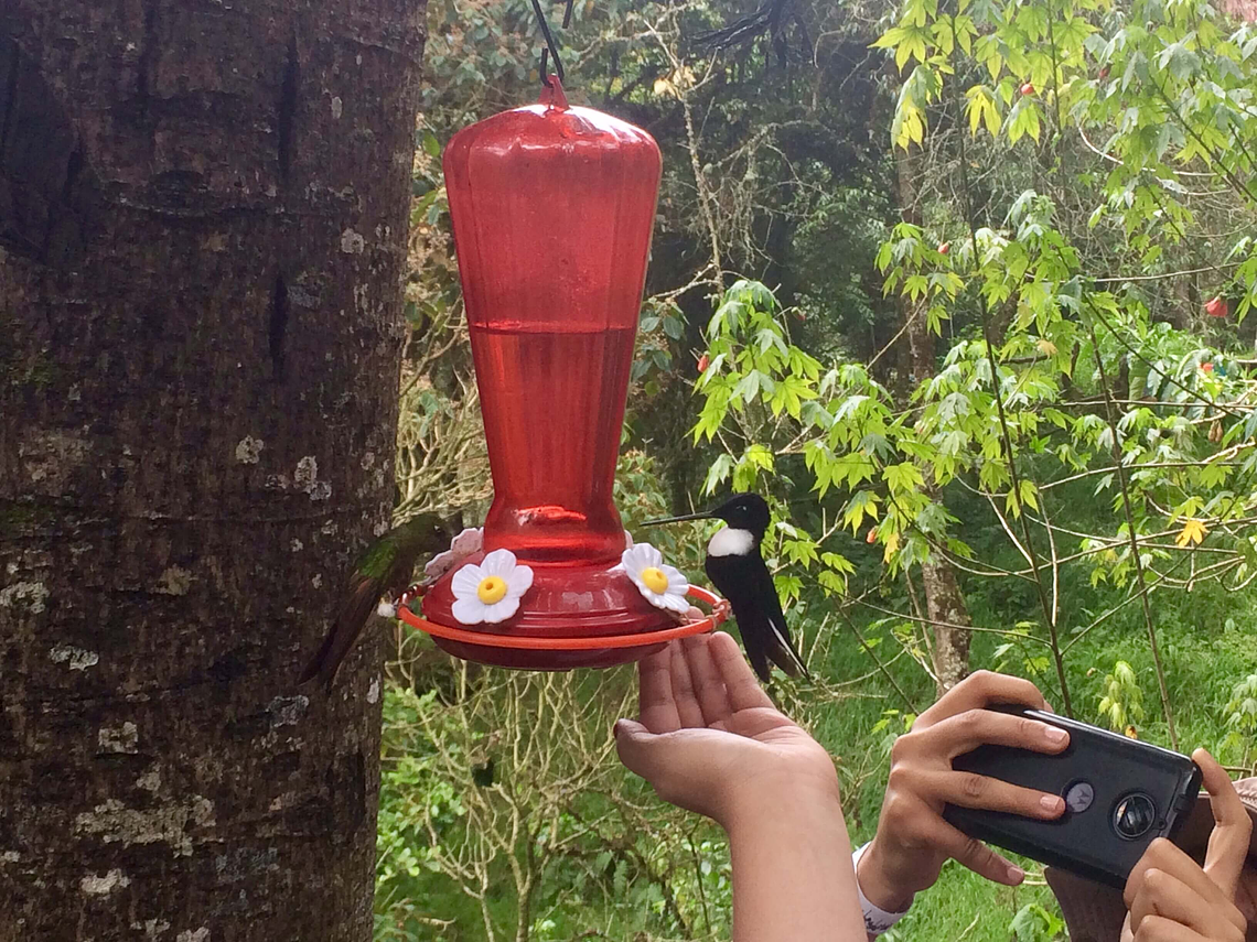 Experience Between Hummingbirds and Wax Palms