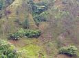 Café Biodinámico y Permacultural (Coffee Tour)