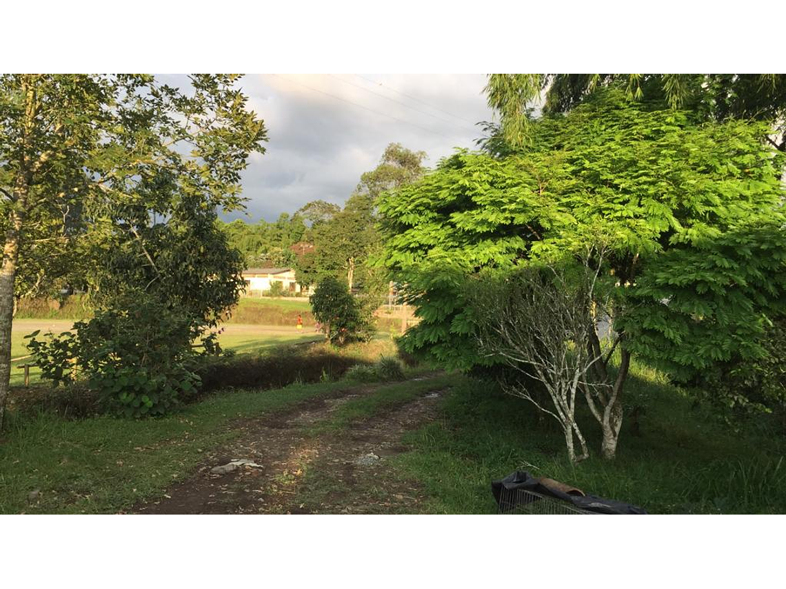 El Camino del Amor a la Naturaleza