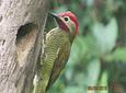 Avistamiento de Aves en Salento (Long Tour)