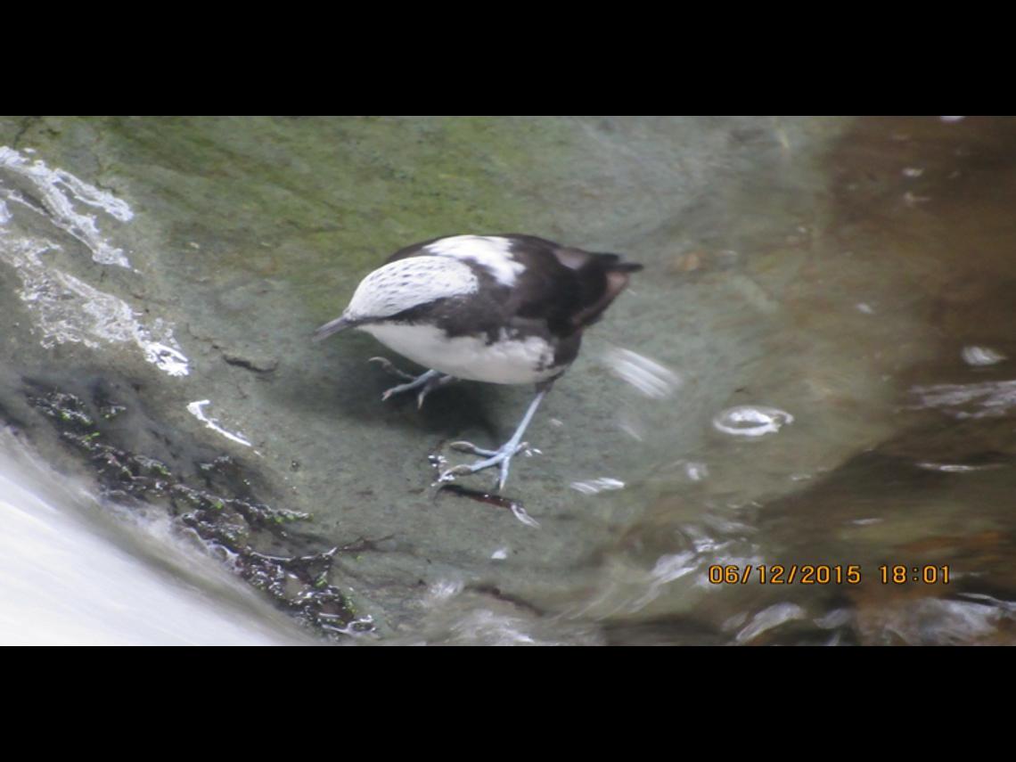 Experiencia Avistamiento de Aves en Salento (Long Tour)