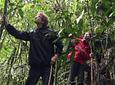 Experiencia Buscando El Mono Aullador En Barbas - Bremen