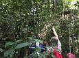 Experience Seeking The Howler Monkey In Barbas - Bremen