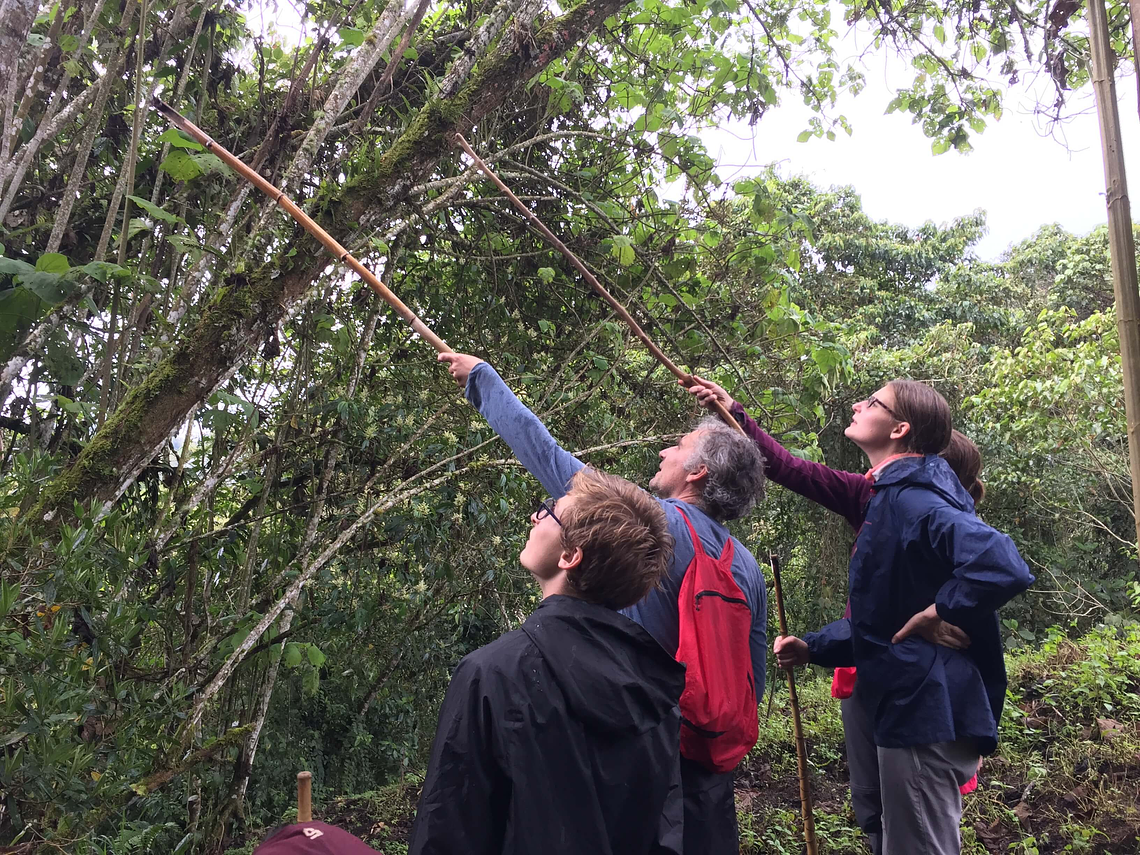Looking For The Howler Monkey In Barbas - Bremen