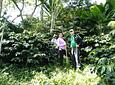 Coffee Tour Caminata del Café, Flores y Aves