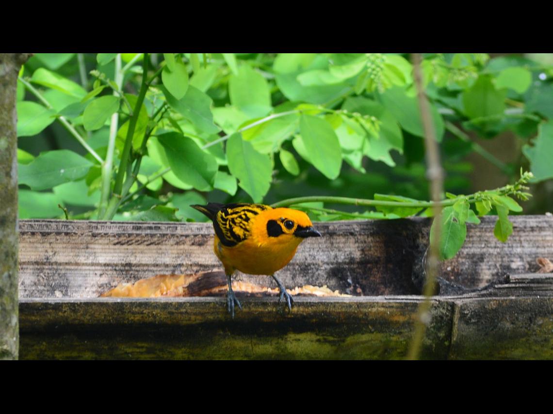 Visite du café Promenade du café, des fleurs et des oiseaux