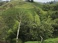 Cabalgata Ecológica en Filandia