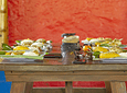 Pasadía de Biciriel, Caballos, Café y Panela