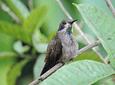 Avistamiento de Aves en Barbas-Bremen Filandia