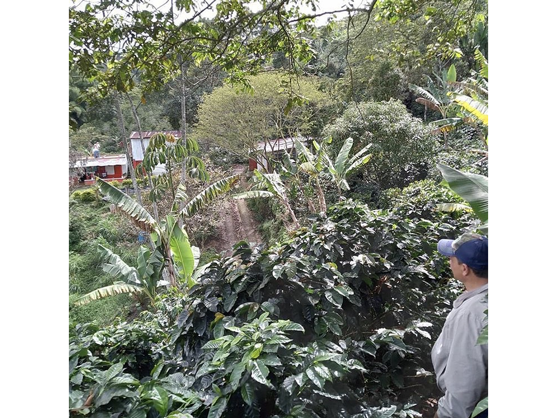Coffee Tour Between Cascasdas, Guaduales and Cafetales