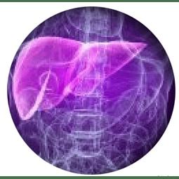 PERFIL HEPATICO (ENZIMAS HEPATICAS)