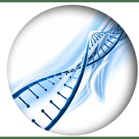 PRUEBAS DE PATERNIDAD (ADN)