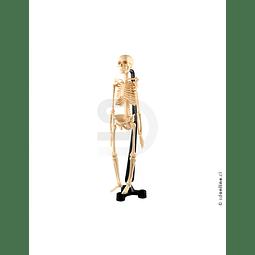 Esqueleto Plástico Articulado Pvc 46Cm