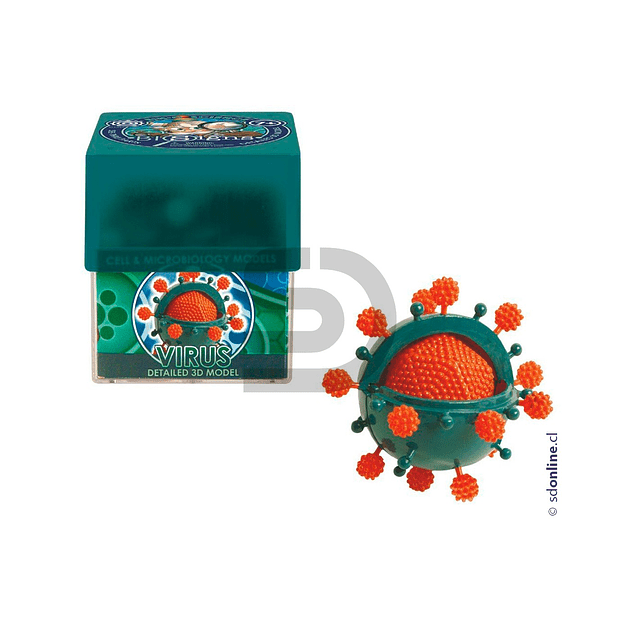 Celula Virus