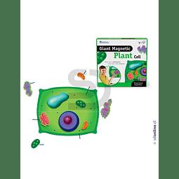 Celula Vegetal Magnética 40Cm