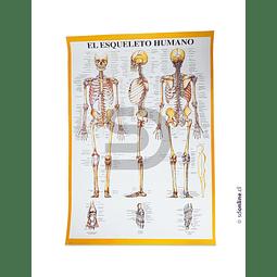 Lámina Del Esqueleto Humano 75X53Cm
