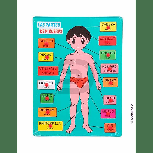 Puzzle Encaje Cuerpo Humano
